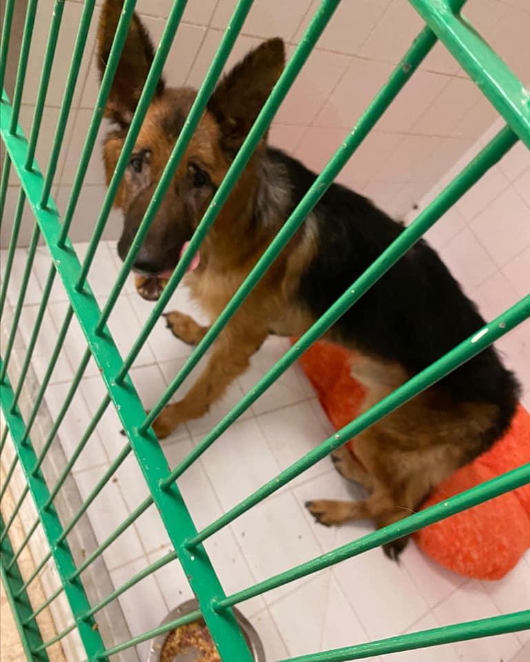 Cucciolo che ha vissuto in gabbia