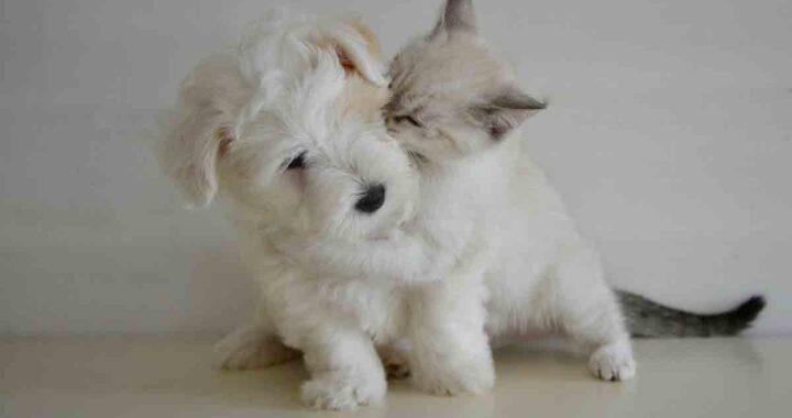 Gattino inseparabile dal cane