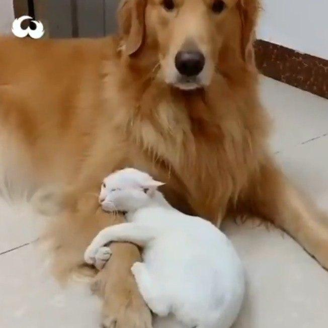Cane e gatto teneramente abbracciati