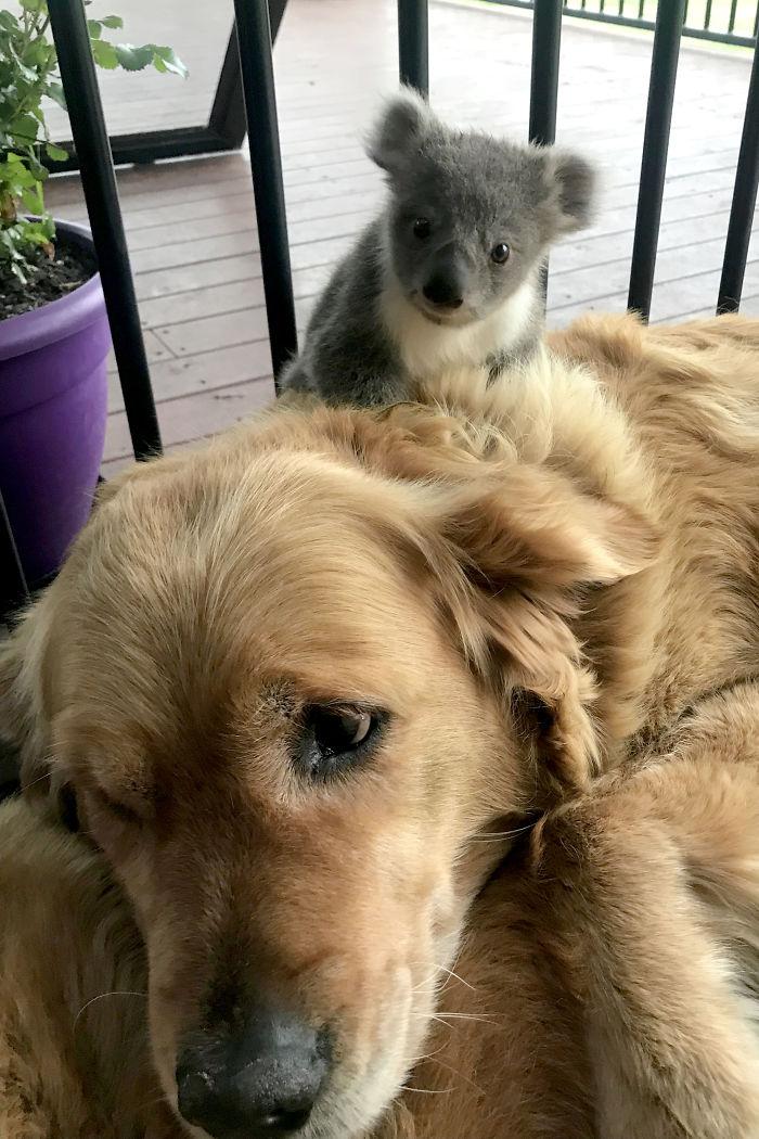 Asha il cane con un nuovo amico