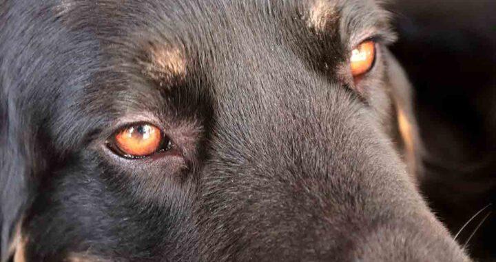 La nuova vita nelle Filippine del cane randagio con rogna