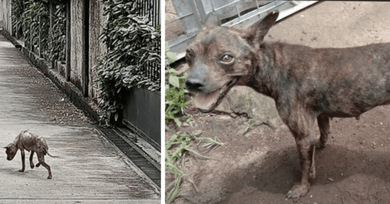 Cagnolino  di strada salvato