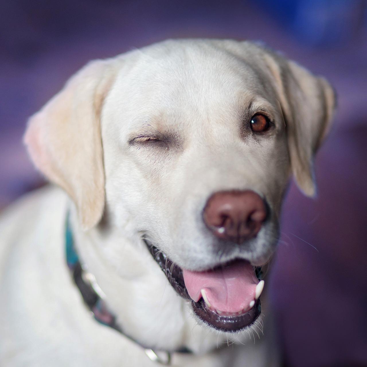 Cane strizza l'occhiolino