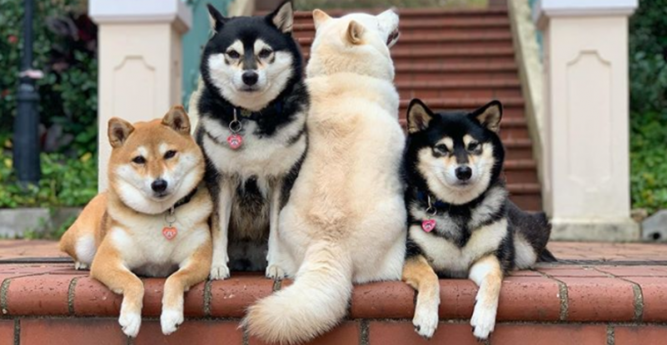 Cani di razza in gruppo
