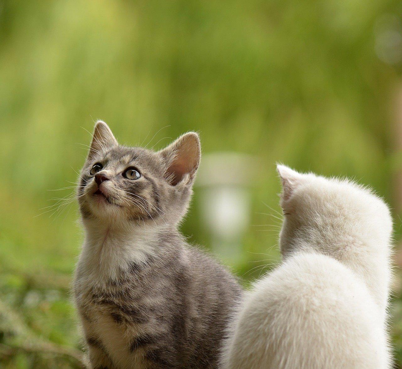 Gattini nascosti nella siepe