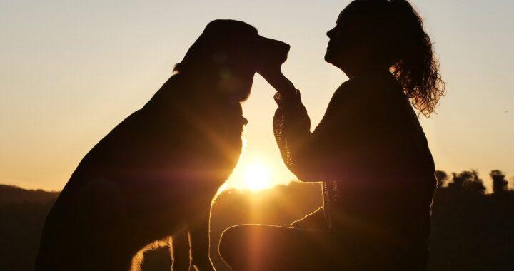 cane salvato dal canile