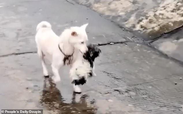Mamma cane salva il figlio