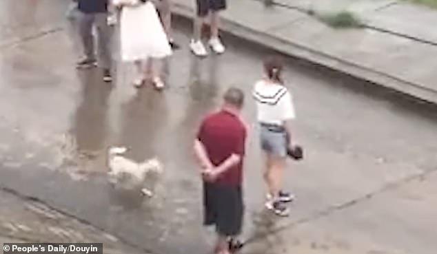 Mamma salva il cucciolo