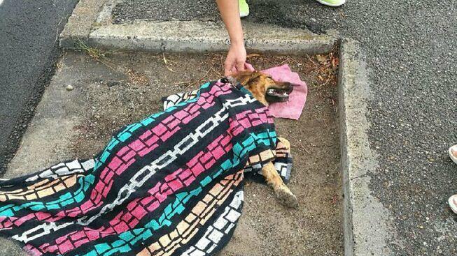 Cane aiutato dopo l'incidente