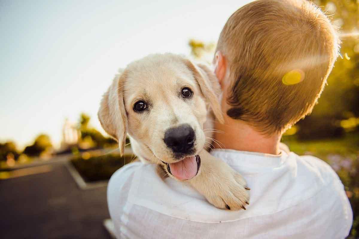 Ragazzo scalda il cane