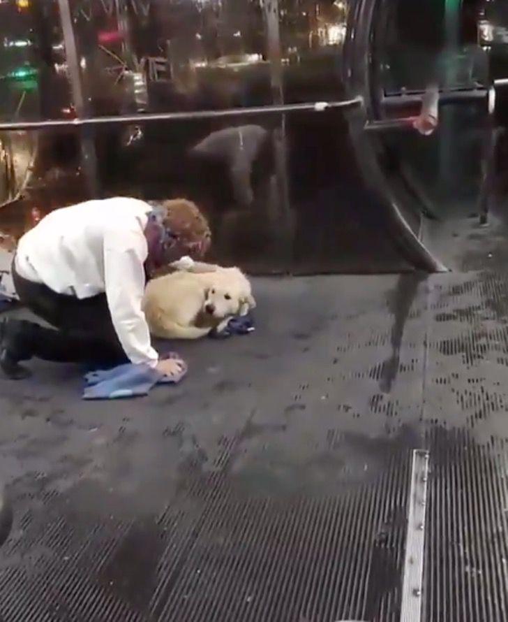 Il cucciolo ha freddo