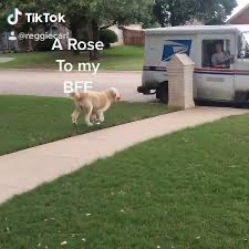 reggie carl postina rosa