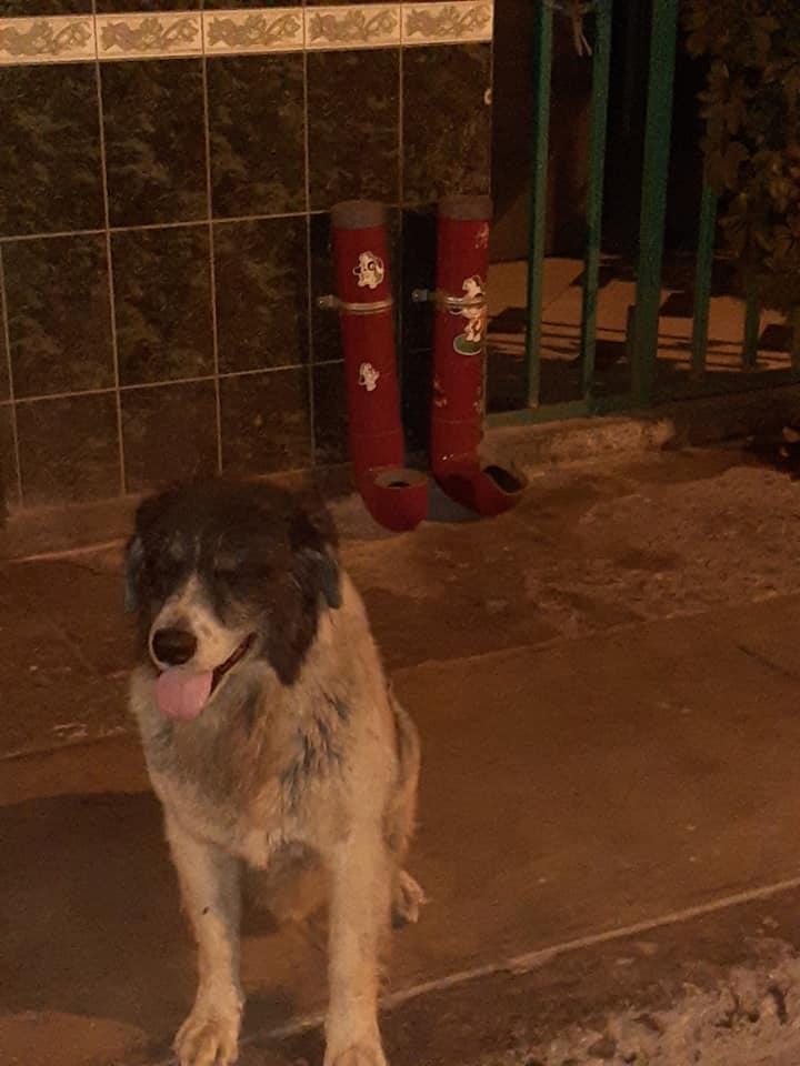 Il ristorante per cani in Perù