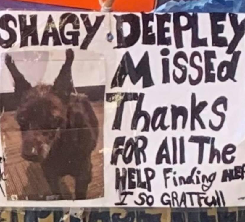 Ricompensa per il cagnolino scomparso