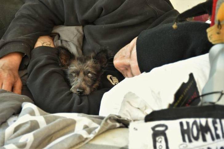 Il cagnolino  rubato al senzatetto