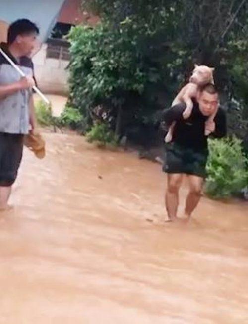 Cane salvato dall'alluvione