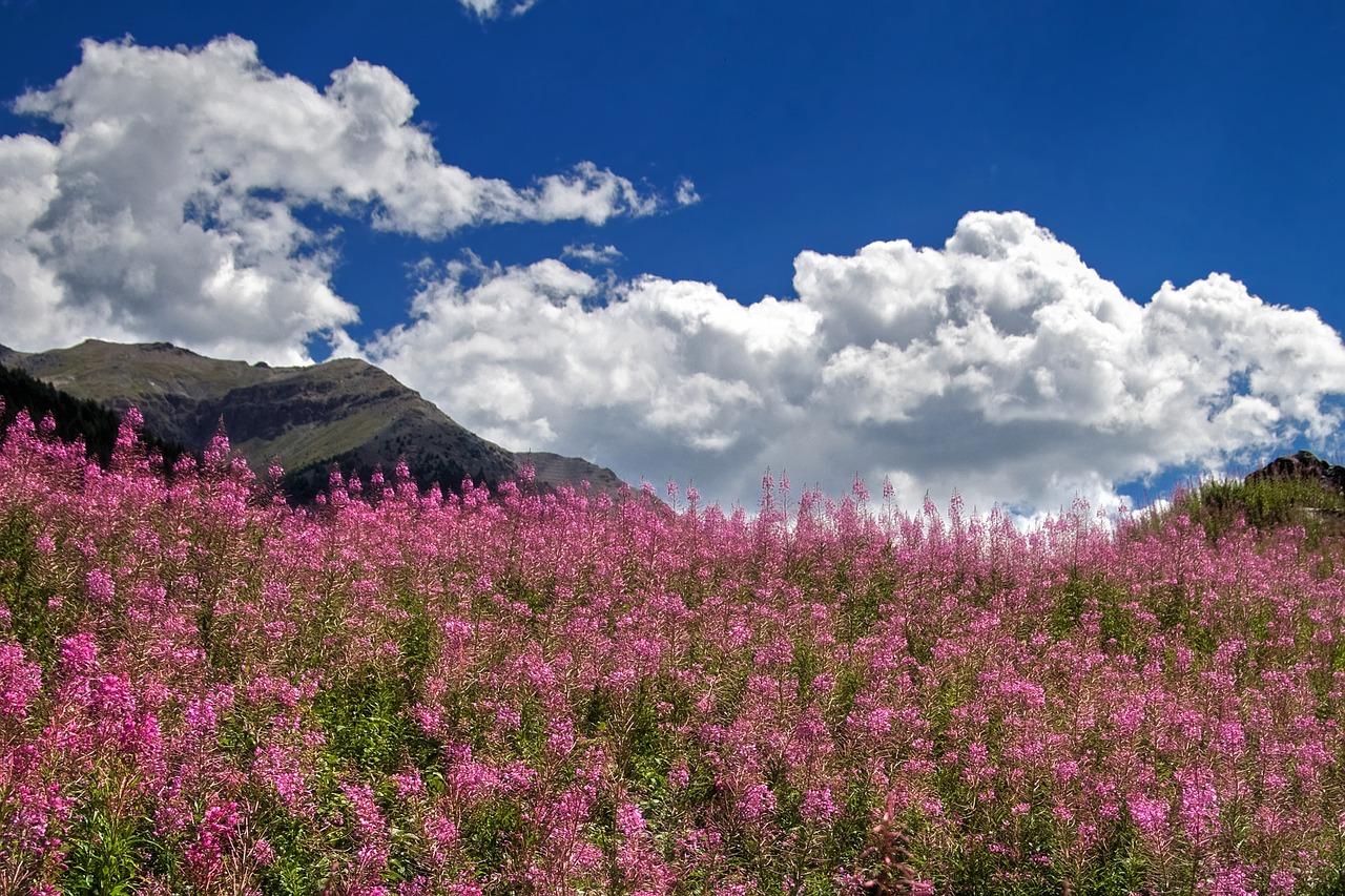 valle-aosta-fioritura