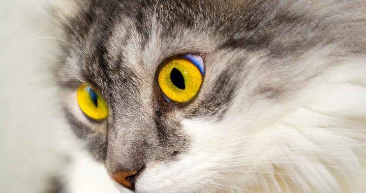 Vigili del fuoco salvano il gattino intrappolato in un tubo