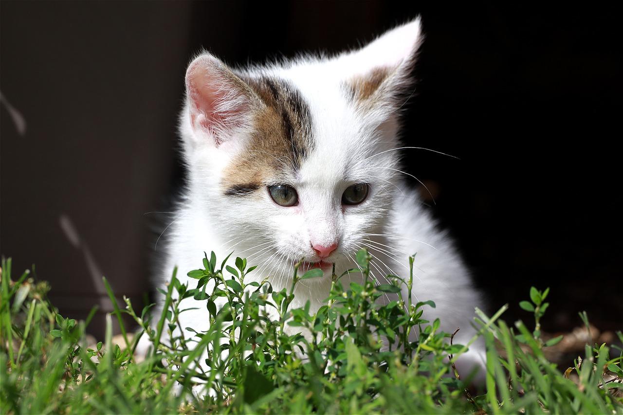 Gattino in difficoltà