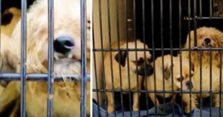 34 cani liberati