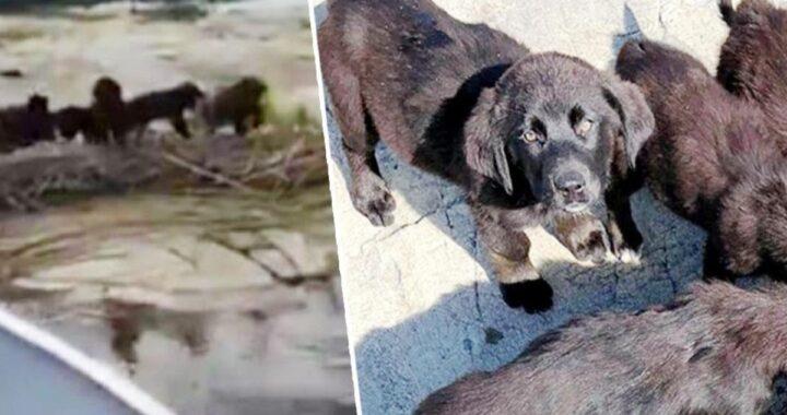 7 cuccioli abbandonati