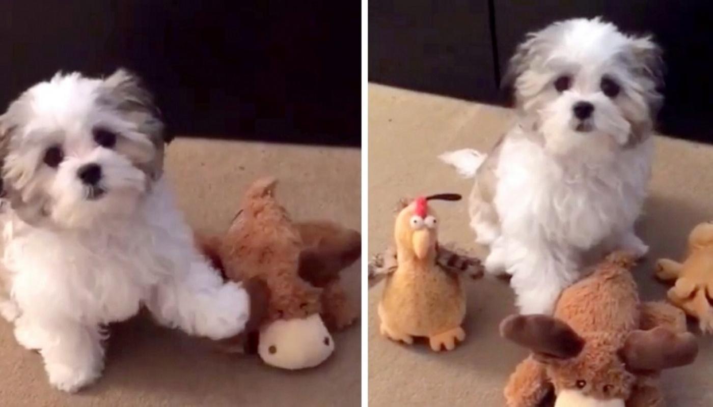 Benji e il suo giocattolo preferito