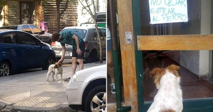 La storia di Bruno, il cagnolino scacciato dalla sua casa