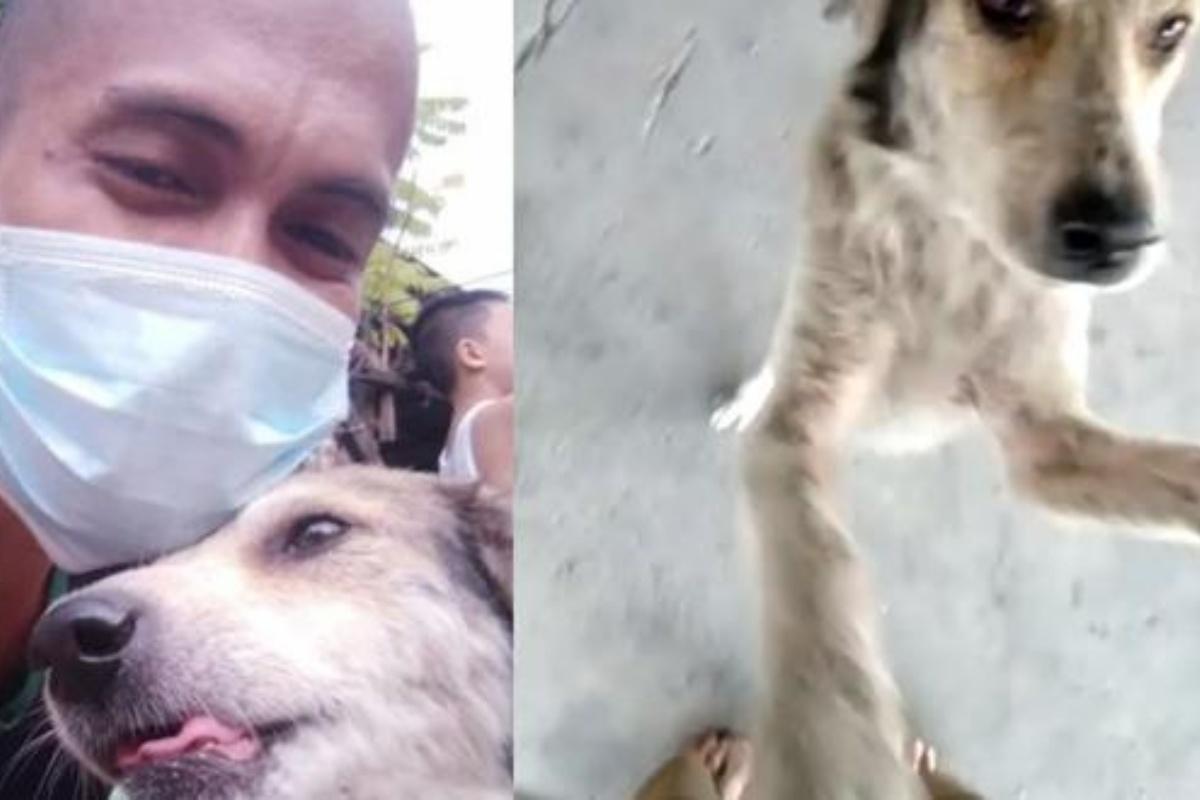 Il cagnolino Coco scomparso per tre mesi