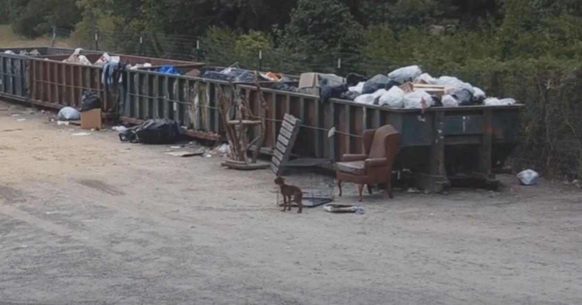 Cucciolo abbandonato vicino ad un cassonetto