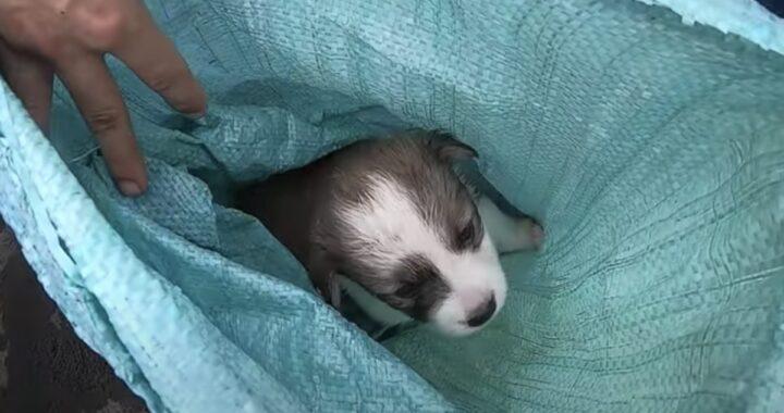 Cucciolo di un mese salvato da un volontario