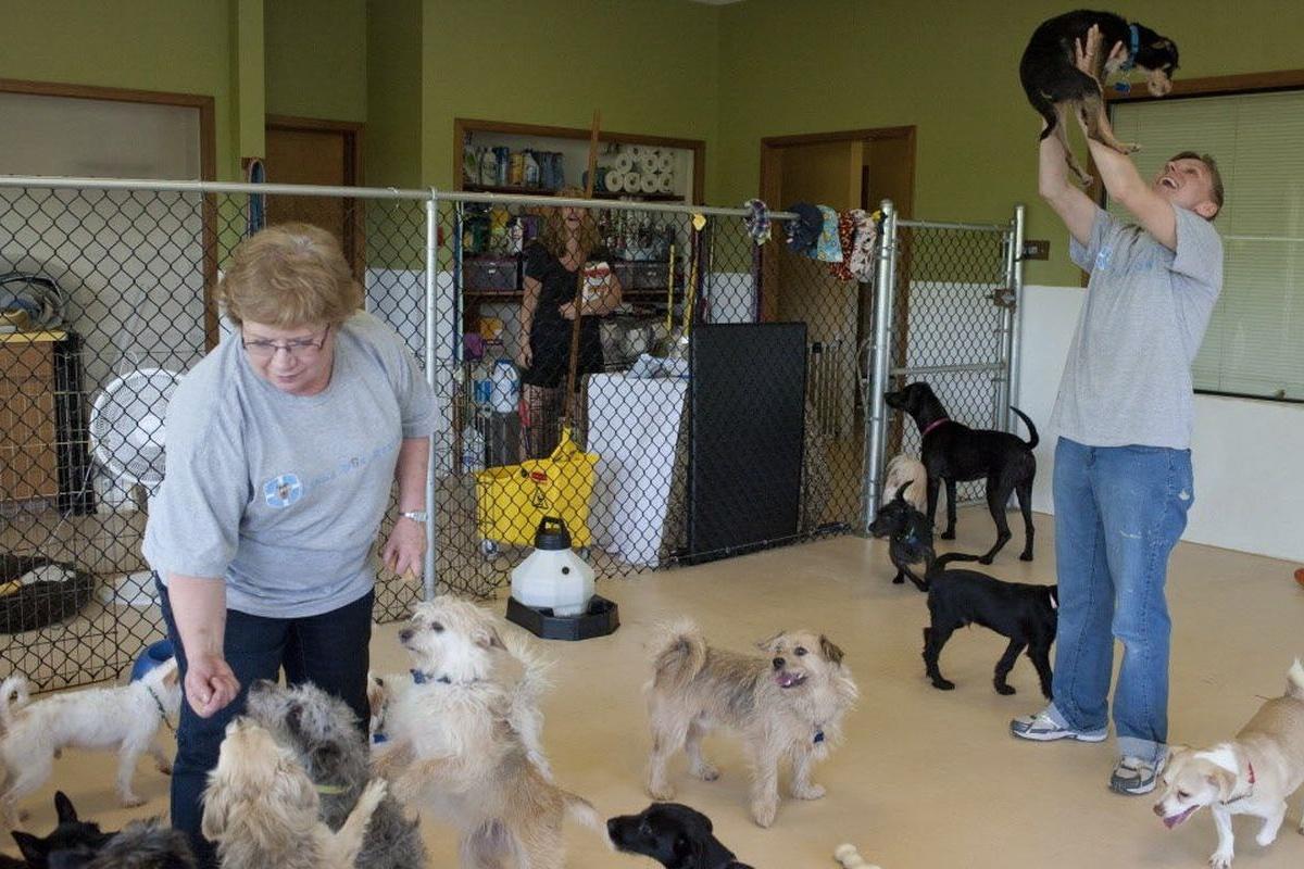 Donna compie un furto di cibo per cani