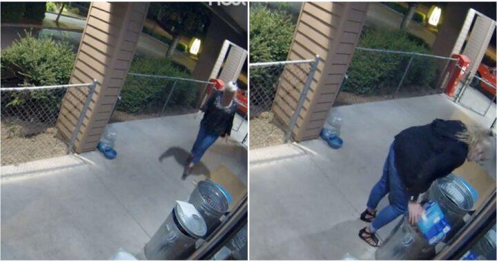 Telecamere riprendono il furto di di una donna di cibo per cani bisognosi