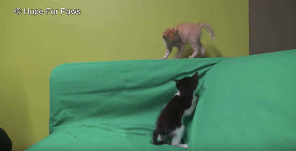 Il salvataggio del gattino