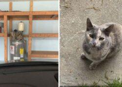Giselle e il gatto nel garage
