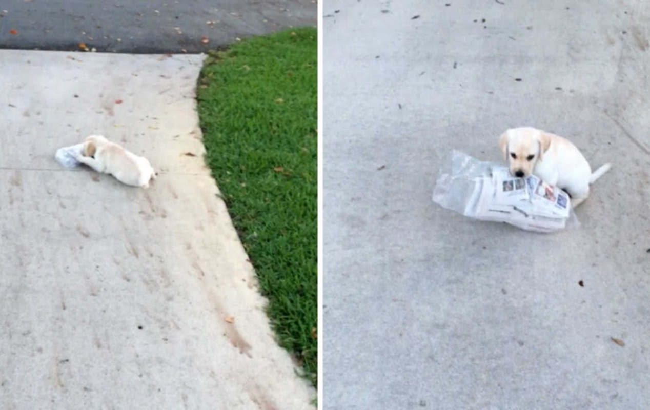 Grace e la lotta con il giornale