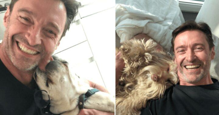 I cani di Hugh Jackman
