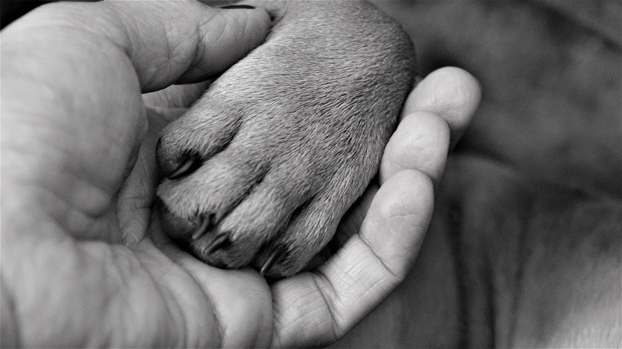 il salvataggio del cucciolo abbandonato