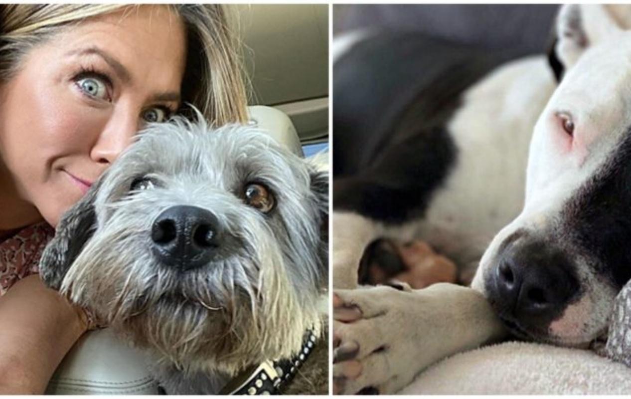 Jennifer Aniston e il nuovo cucciolo