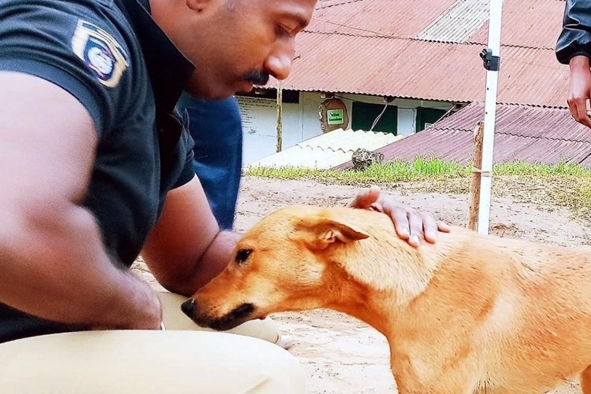La storia del cagnolino Kuvi