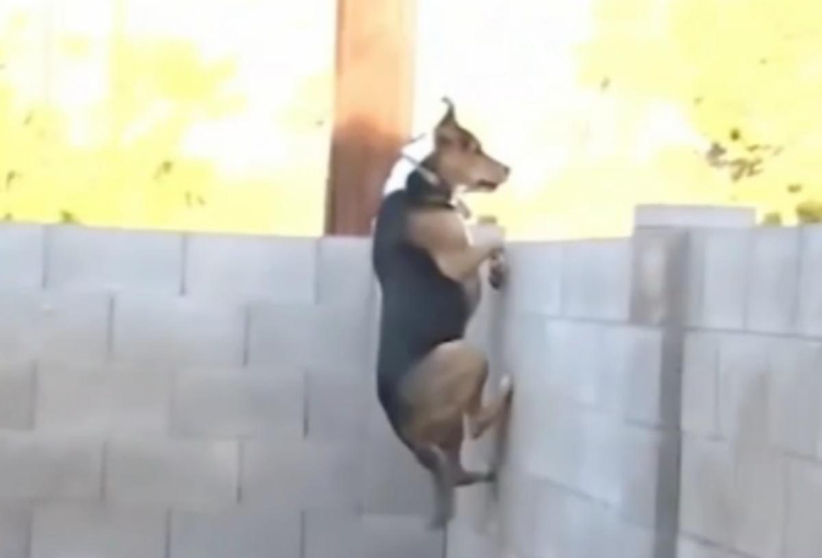 Il video di Max