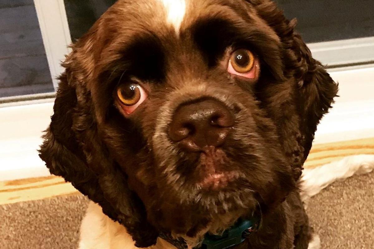 Max, il cagnolino abbraccia tutti
