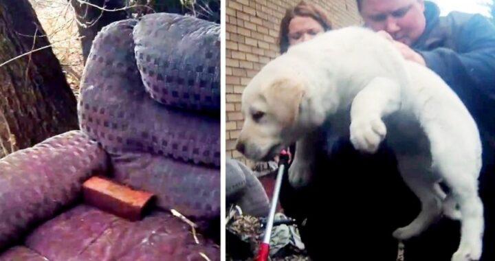 Pam e il salvataggio del cuccioli