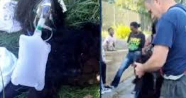 Vigili del Fuoco salvano  Prince: era rimasto bloccato nell'incendio
