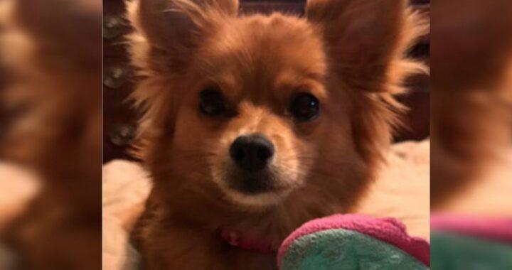 L'avvertimento di un proprietario dopo la morte della cagnolina Sofie