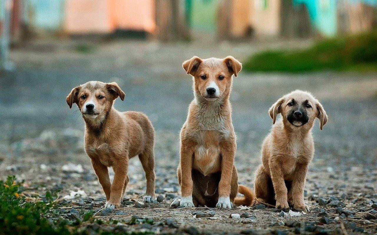Cuccioli di cani abbandonati