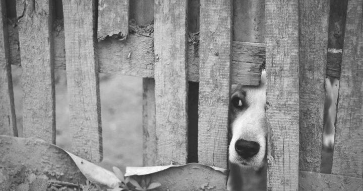 Cosa fare per aiutare il cane abbandonato