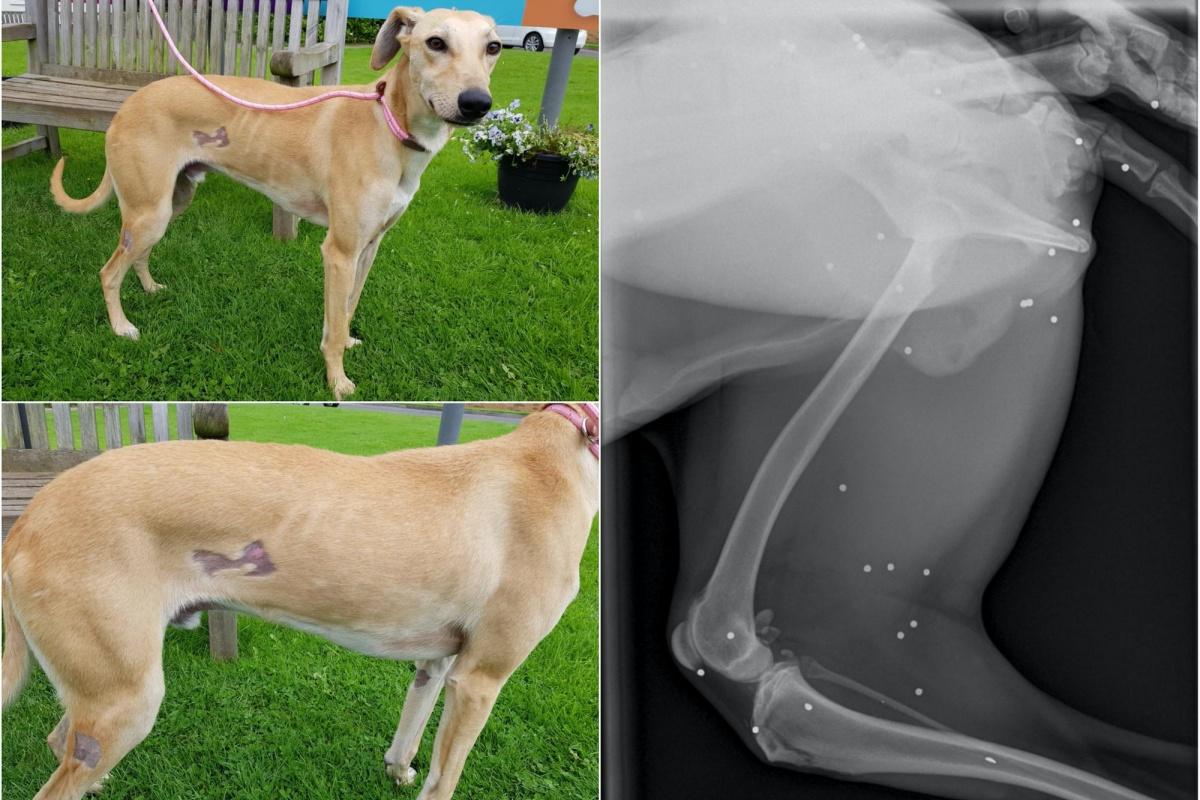 ashton cane terrorizzato