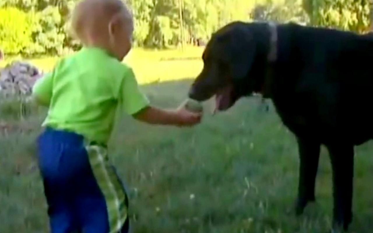 Bear salva il suo fratellino umano