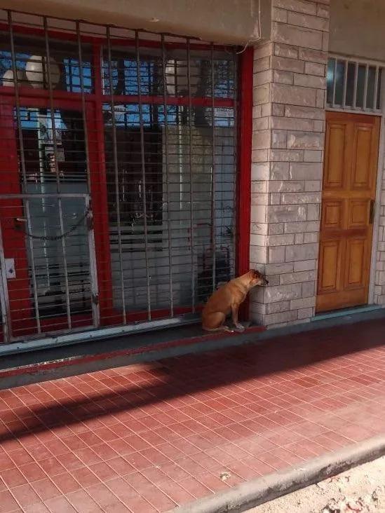 Bianca aspetta la proprietaria