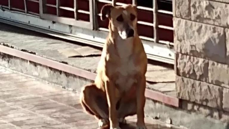 Bianca la cagnolina rimasta orfana